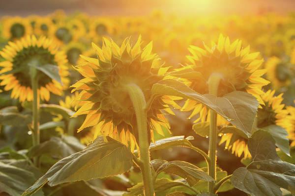 Photograph - Sun Glow by Eilish Palmer