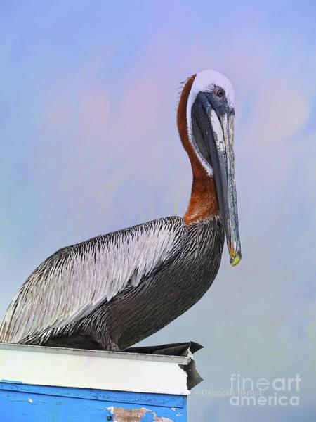 Photograph - Sun Glow Pelican by Deborah Benoit
