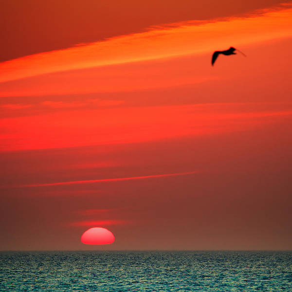 Wall Art - Photograph - Sun Is Up by Dapixara Art