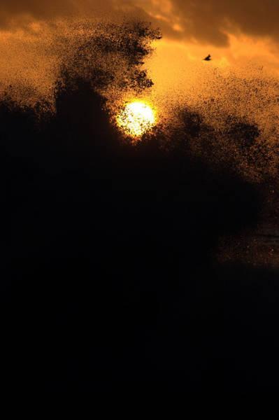 Photograph - Sun Monster by Brad Scott