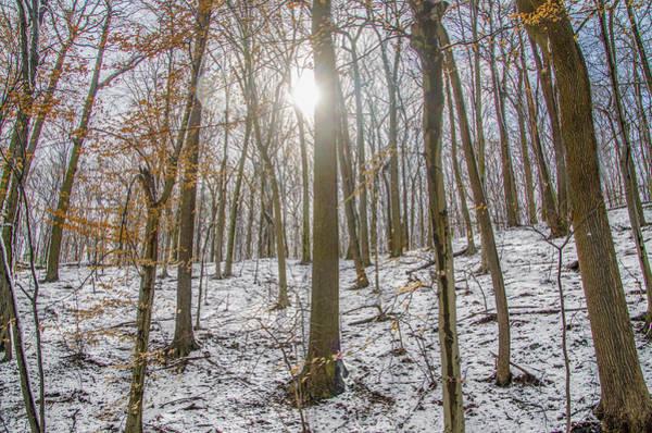 Photograph - Sun Peaking Through The Trees - Fairmount Park by Bill Cannon
