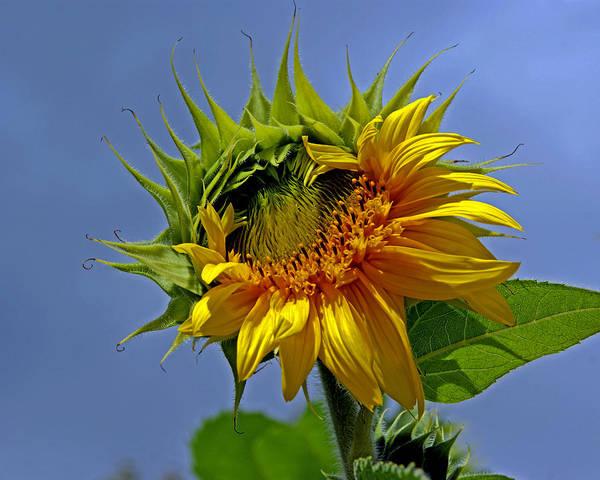 Photograph - Sun Queen by Lynda Lehmann
