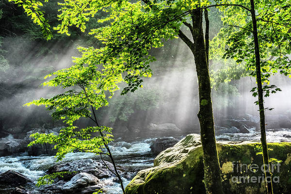 Photograph - Sun Rays On Williams River  by Thomas R Fletcher