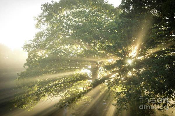 Photograph - Sun Rays Through The Trees by Alana Ranney