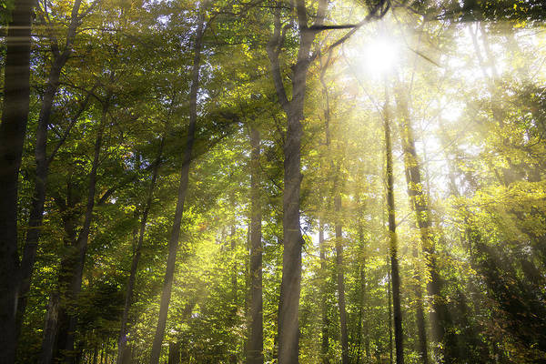 Photograph - Sun Rays Through Trees by Garry Gay