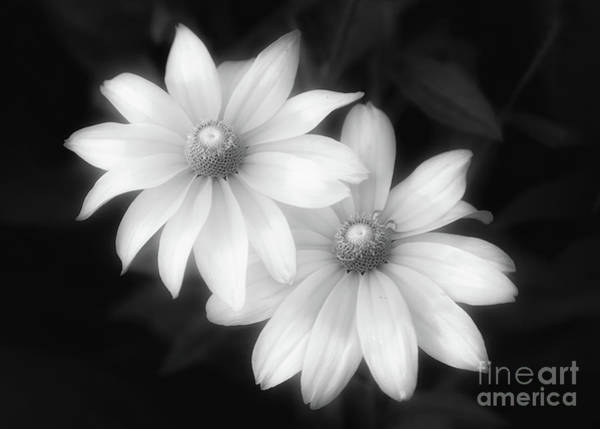Photograph - Sun Sisters In Black And White by Anita Pollak