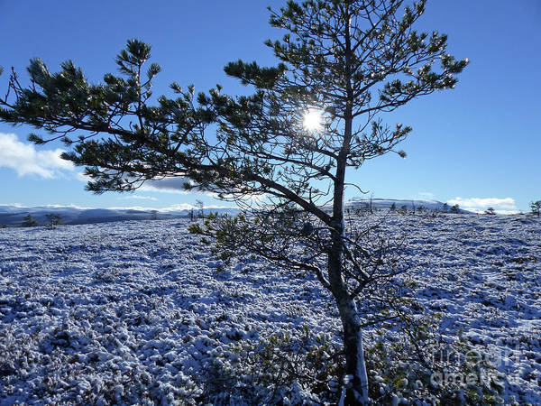 Photograph - Sun, Snow And Ice - Hills Of Cromdale by Phil Banks