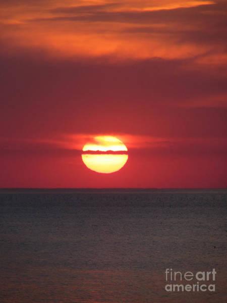 Photograph - Sun Spot by Pamela Clements