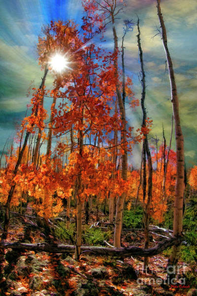 Photograph - Sun Though Rising Fall by Blake Richards