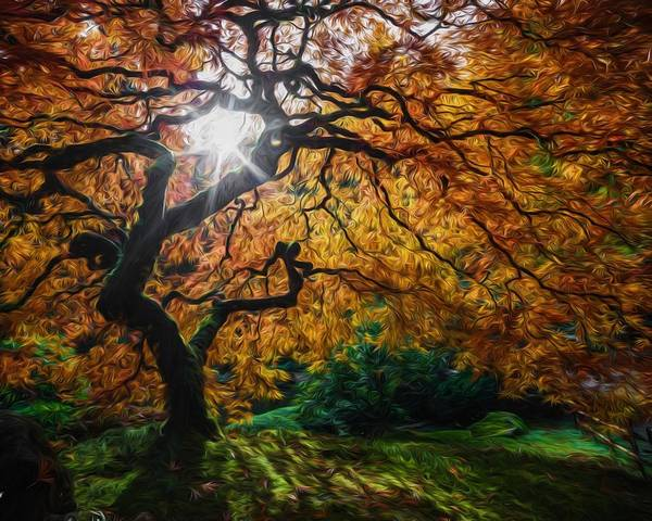 Photograph - Sun Through The Canopy by Wes and Dotty Weber