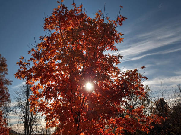 Photograph - Sun Through The Tree by Michael Colgate