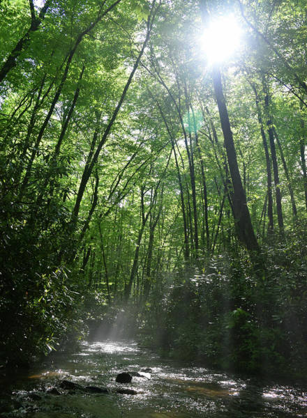 Millrace Wall Art - Photograph - Sun Through The Trees by Pat Turner