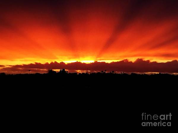 Photograph - Sun Trails by Jenny Revitz Soper