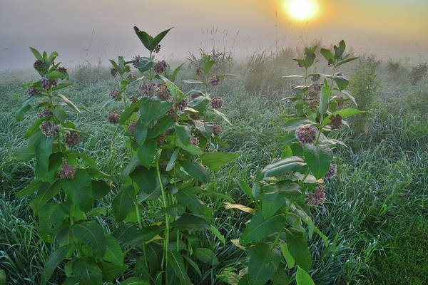 Photograph - Sun Tries To Break Through Fog In Glacial Park by Ray Mathis