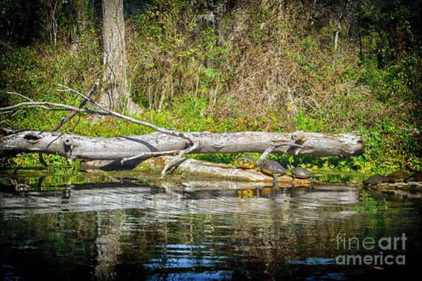 Photograph - Sunbathing by Judy Hall-Folde