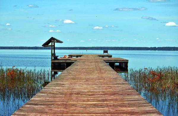 Photograph - Sunbathing On The Dock by Cynthia Guinn