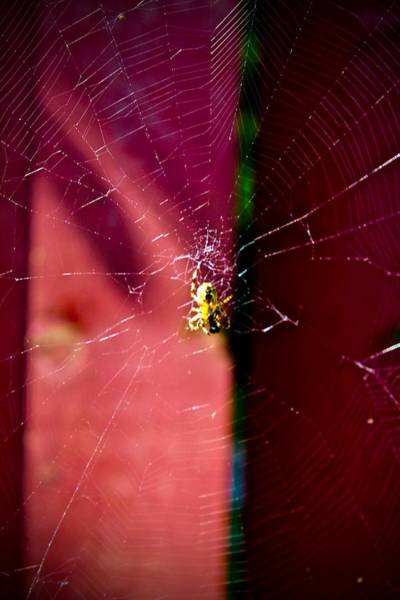 Photograph - Sunbathing Spider by Mario MJ Perron