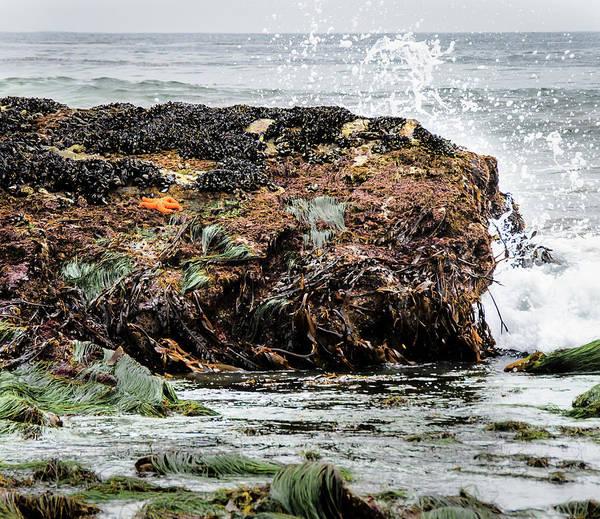 Photograph - Sunbathing Starfish by Penny Lisowski