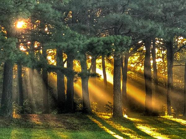 Photograph - Sunbeams II by Sumoflam Photography
