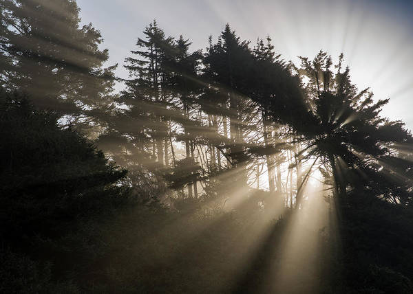 Photograph - Sunbeams In The Trees by Robert Potts