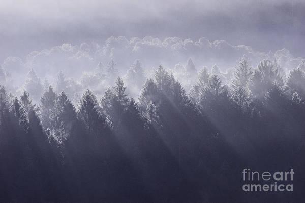 Tree Wall Art - Photograph - Sunbeams by Yuri San