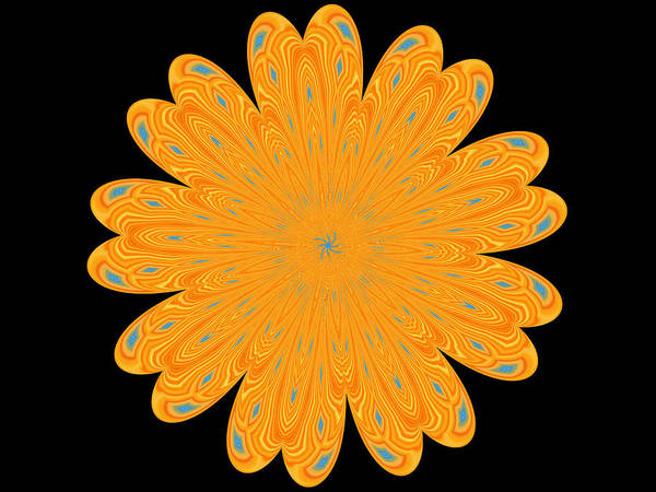 Photograph - Sunburst Bloom by Kathy K McClellan