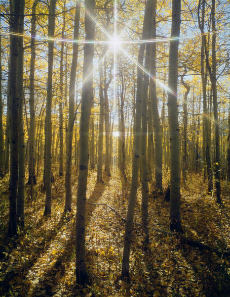 Photograph - 107002-a-sunburst In Aspens  by Ed  Cooper Photography