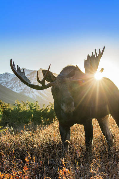 Wall Art - Photograph - Sunburst In The Antlers by Tim Grams