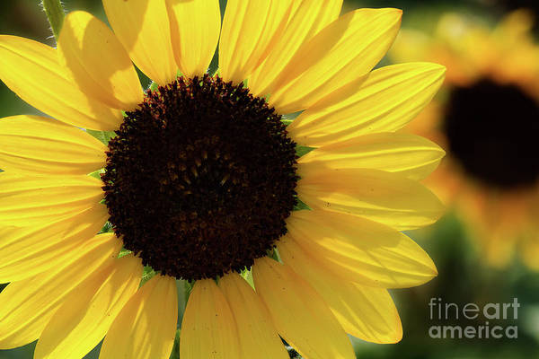 Photograph - Sunburst by Jim Garrison