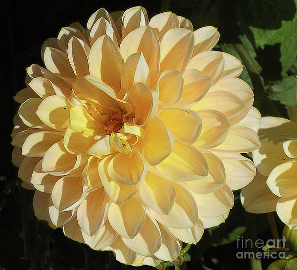 Photograph - Sunburst by Joyce Creswell