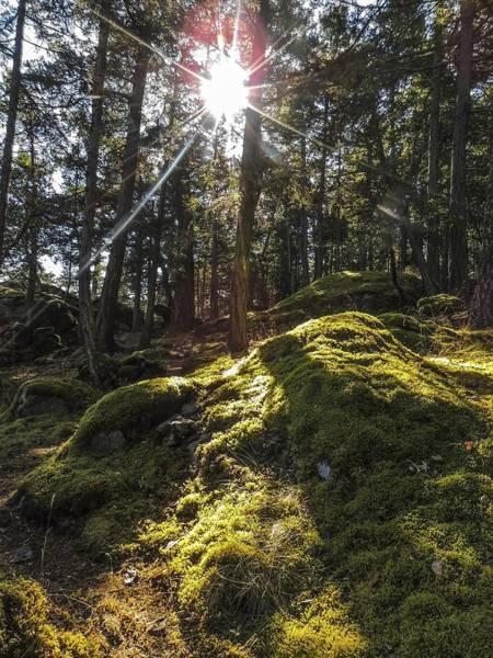 Photograph - Sunburst On Frost Island by NaturesPix