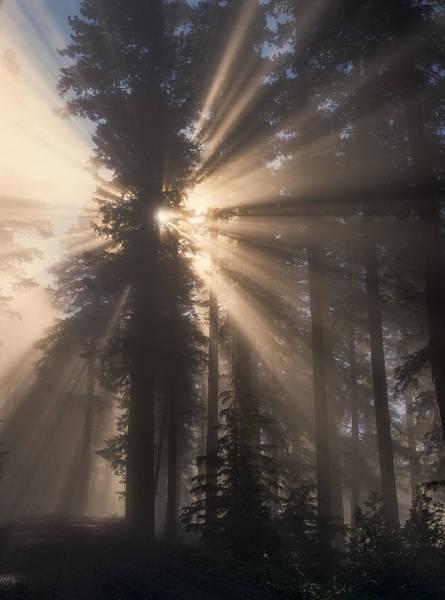 Photograph - Sunburst by Robert Potts