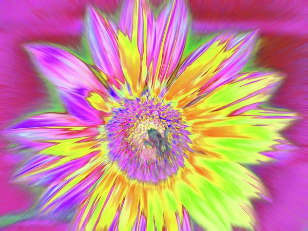 Photograph - Sunbuzzy by Cris Fulton