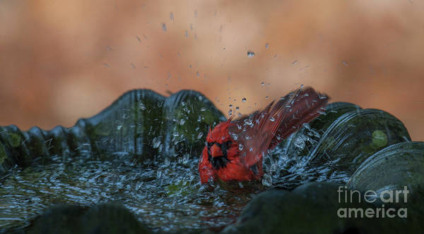 Photograph - Sunday Bath by Dale Powell