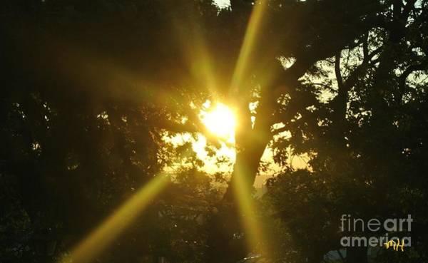 Thru Photograph - Sunday Rays Thru The Trees by Marsha Heiken