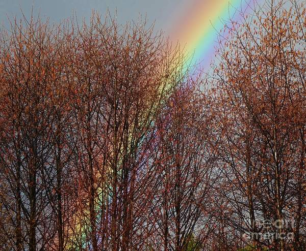 Photograph - Sunday's Rainbow by Laura  Wong-Rose
