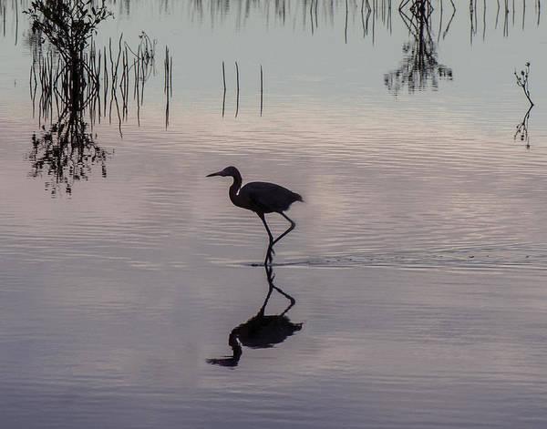 Photograph - Sundown Heron Silhouette by William Bitman