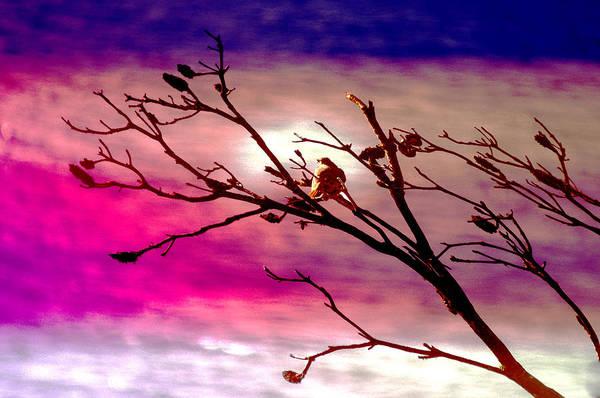 Wall Art - Photograph - Sundown by Holly Kempe