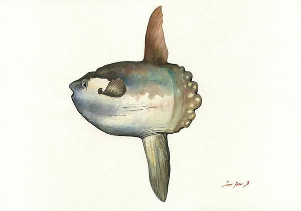 Wall Art - Painting - Sunfish Painting by Juan Bosco