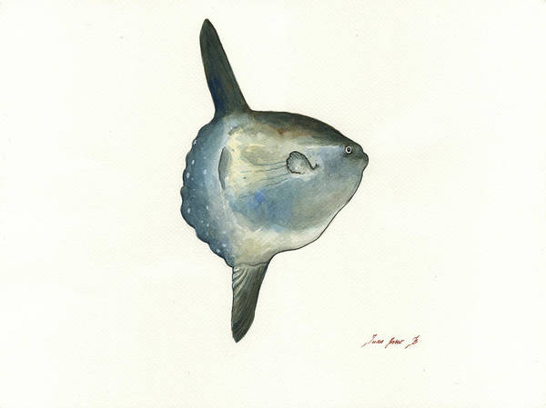 Wall Art - Painting - Sunfish Watercolor by Juan Bosco