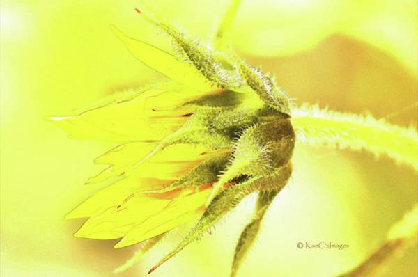 Sunny Mixed Media - Sunflower 181 by Kae Cheatham