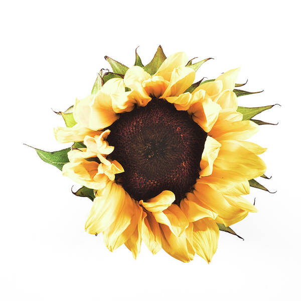 Photograph - Sunflower #2 by Desmond Manny