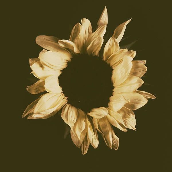 Sunflower #3 Art Print