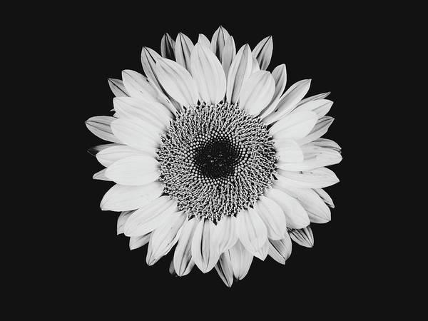 Photograph - Sunflower #8 by Desmond Manny
