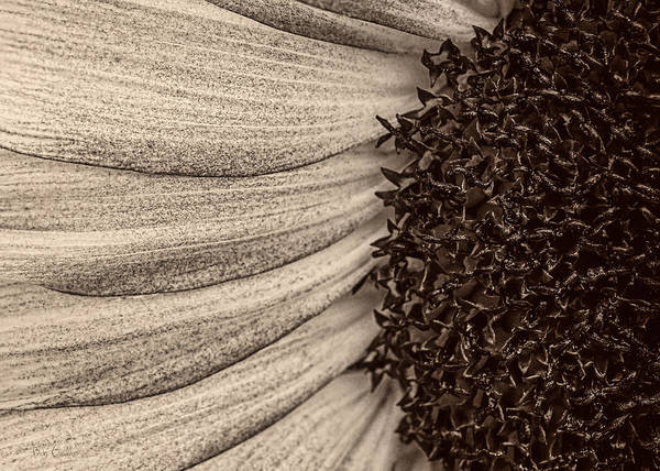 Photograph - Sunflower Abstract by Bob Orsillo
