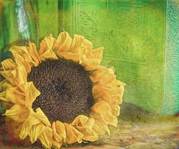 Photograph - Sunflower And Green Glass by Bellesouth Studio