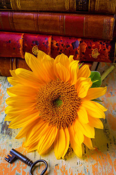 Wall Art - Photograph - Sunflower And Leather Books by Garry Gay