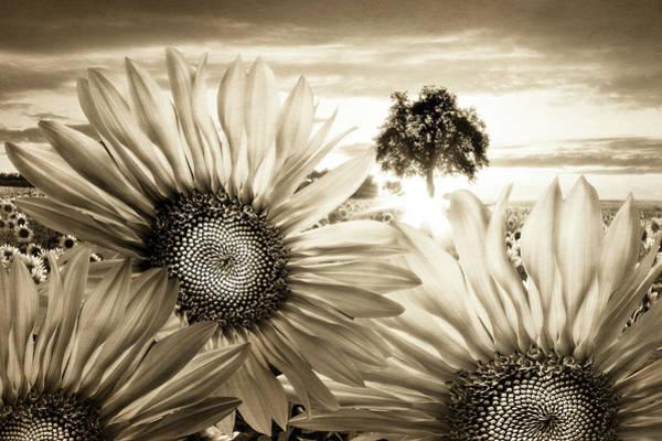 Photograph - Sunflower Angels by Debra and Dave Vanderlaan
