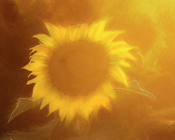 Photograph - Sunflower Art-01 by Rob Graham