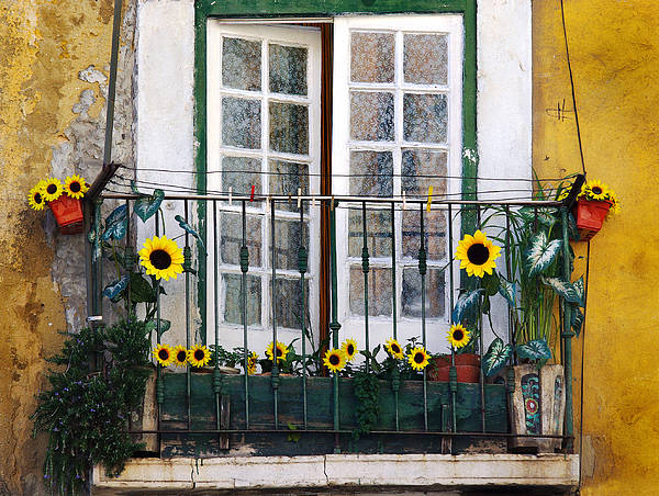 Improvement Photograph - Sunflower Balcony by Carlos Caetano